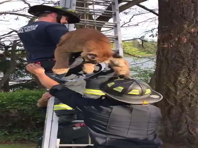 """Пожарные сняли """"котика"""" с дерева"""