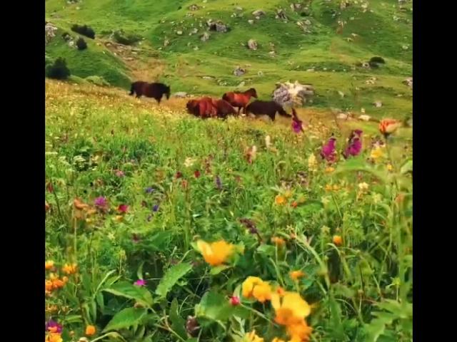 Весна в Ингушетии