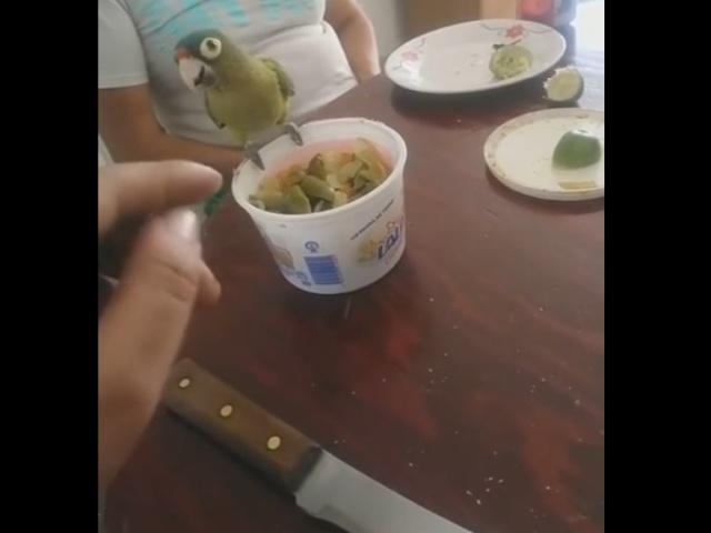Попугай и перчик чили