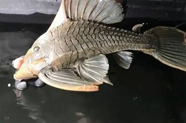 Когда аквариумной рыбке уже 25 лет (6 фото)