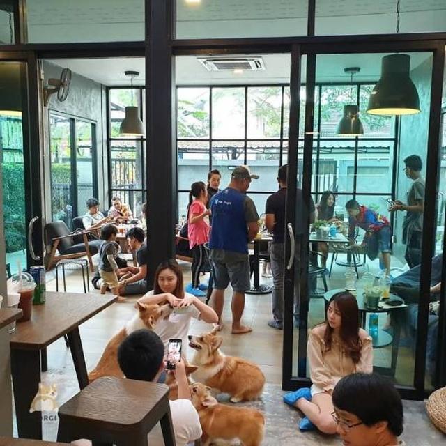 Антистресс-кафе в Таиланде (15 фото)