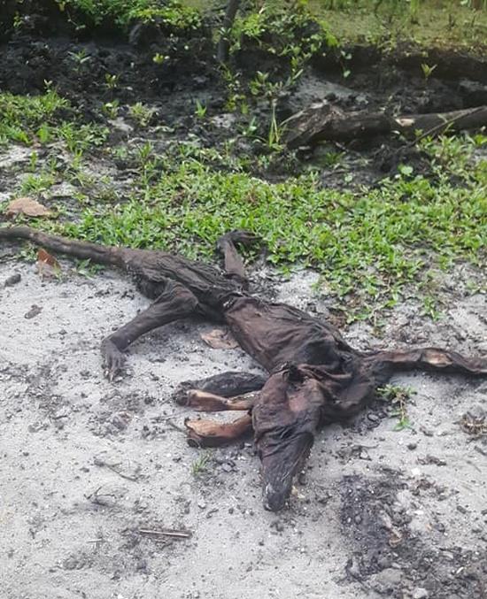 В США нашли останки загадочного существа (4 фото)