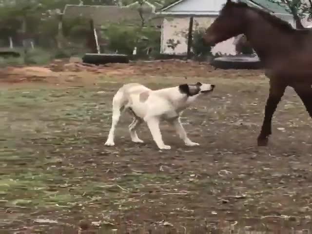 Лучшие друзья: пес и конь