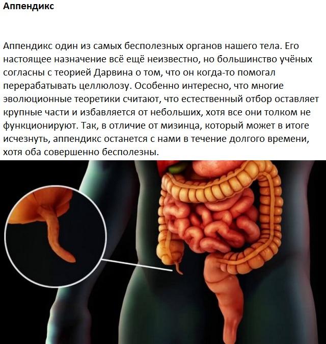 Следы на человеческом теле, оставленные эволюцией (10 картинок)
