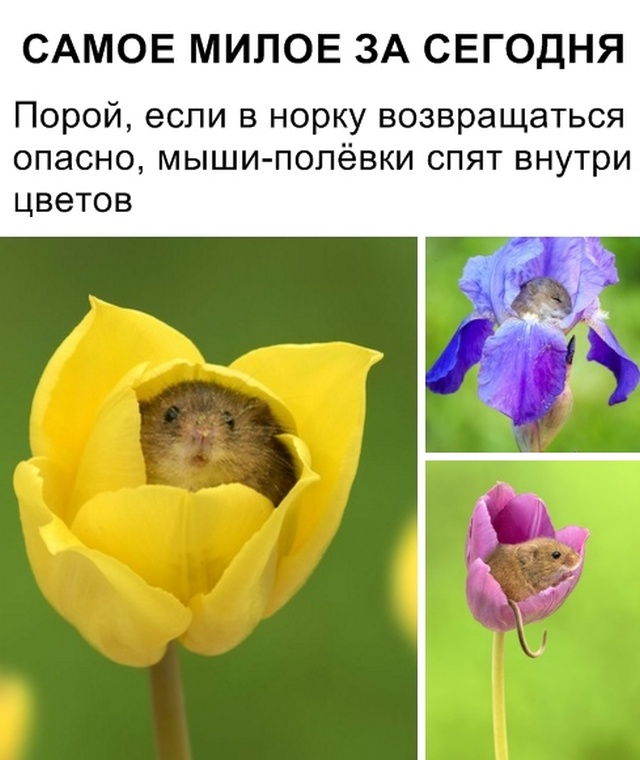 podb_dnevnaya_21.jpg