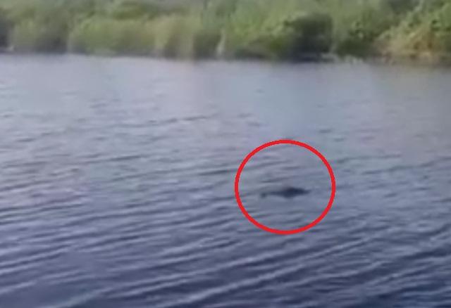 Рыбак из Астрахани утверждает, что снял на видео крокодила в реке