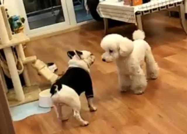 Собаки - такие забавные и порой странные