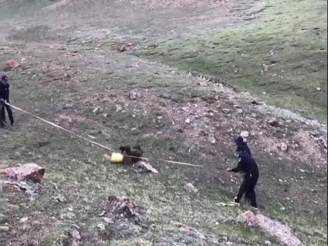 """Спасение медвежонка из пластикового """"плена"""""""