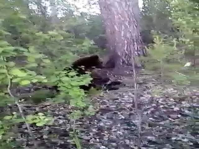 """""""Слабоумие и отвага"""": Как нельзя поступать в лесу"""
