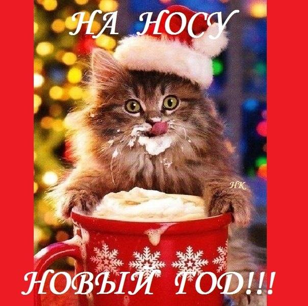 Новогодняя открытка - Котенок - На носу новый год