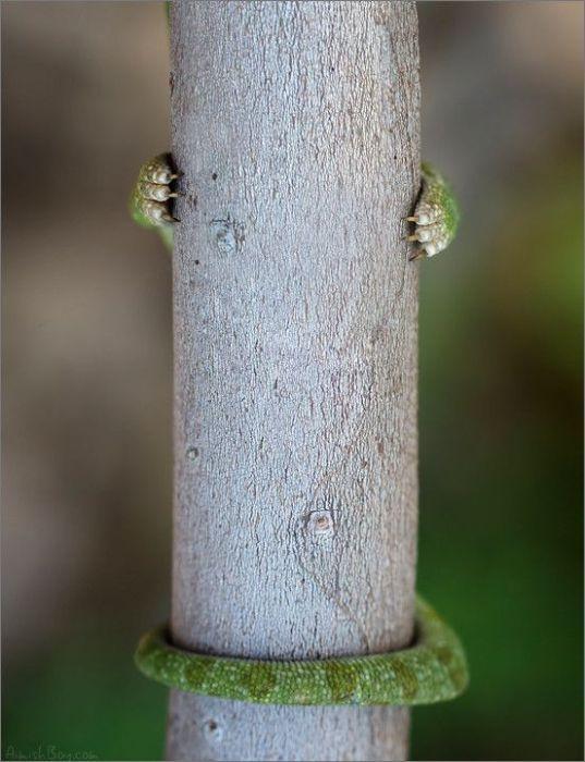Позитив про ящериц или ностальгия по хамелеону :)