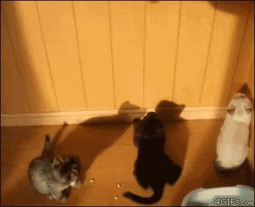 Кошачьи фэйлы