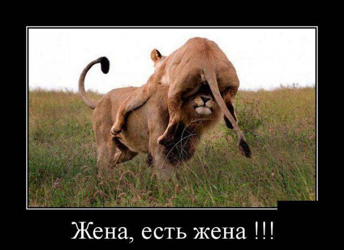 Пинок хорошего настроения:)