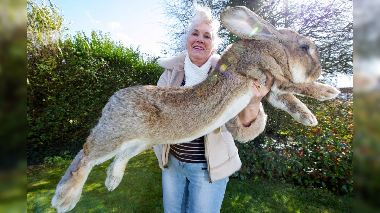 Самые необычные домашние животные, выведенные людьми