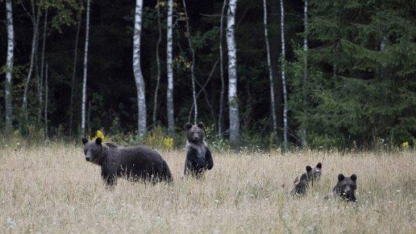 В Приморье детям запретили гулять на улице из-за медведей