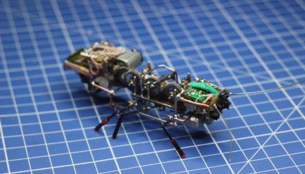 В России создали робота-таракана (фото + видео)