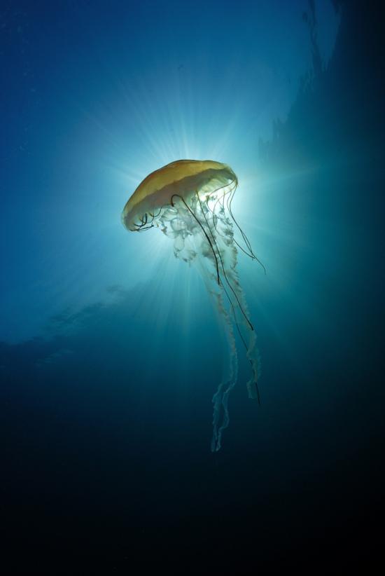 Фотоконкурс «Самая красивая страна», категория Подводный мир