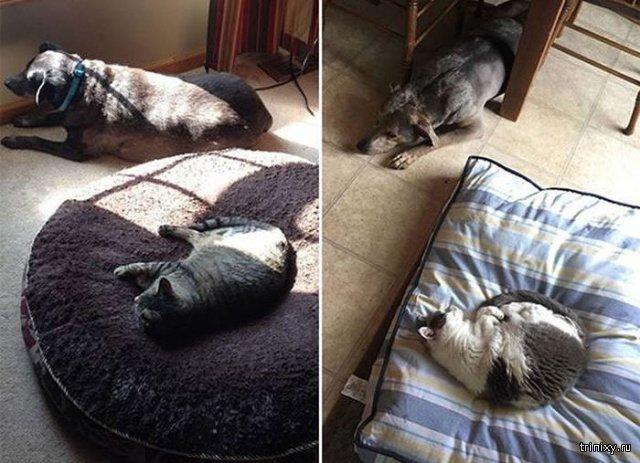 Наглые коты