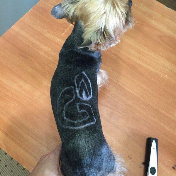 В Новом Уренгое появилась собака с выбритым на спине логотипом «Газпрома»