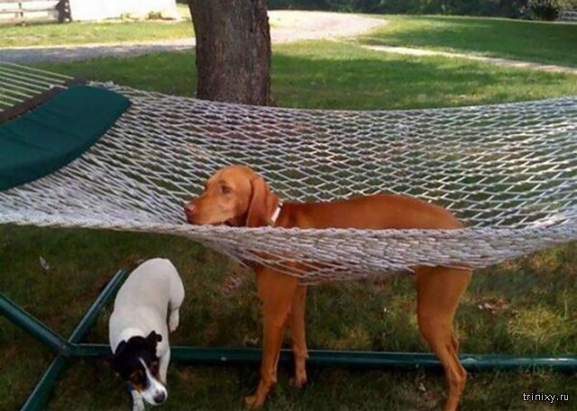 Собачьи неудачи