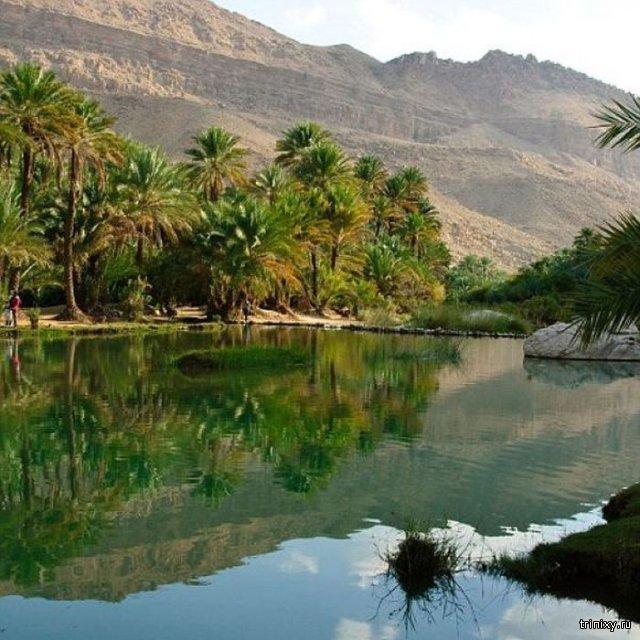 Салала - сезонные тропические джунгли посреди пустыни