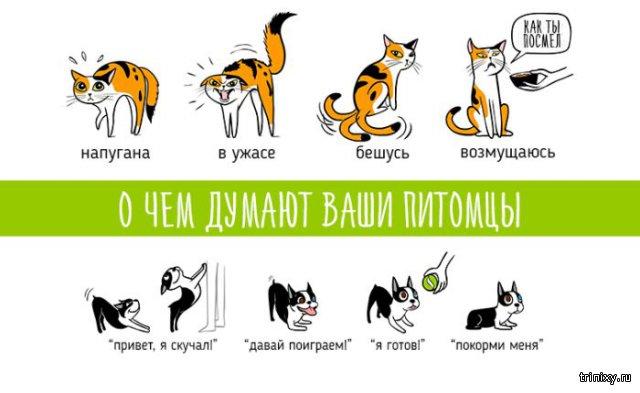 Язык тела домашних животных