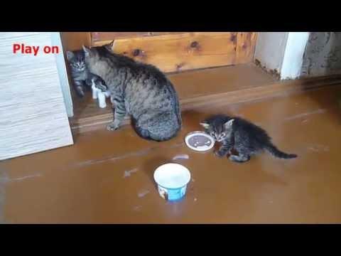Кошки и молоко!
