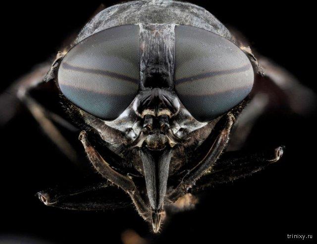 Макро фотографии глаз насекомых