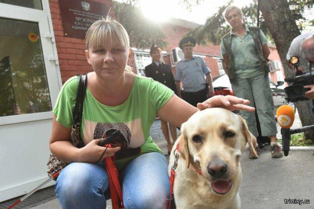 Московскую зоозащитницу признали виновной в краже собаки-поводыря у слепой женщины