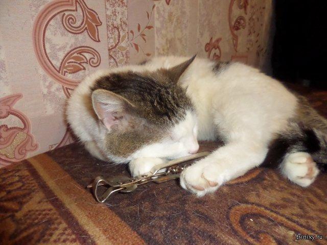 Фото Кот и Открывашка