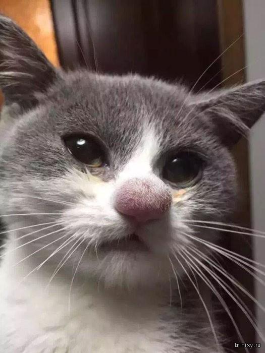 Коты, пытавшиеся ловить пчел или ос