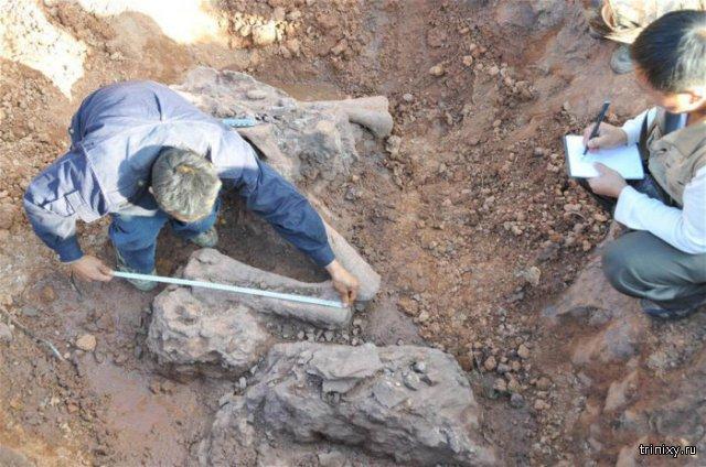 В Китае обнаружили окаменелости люфенгозавров