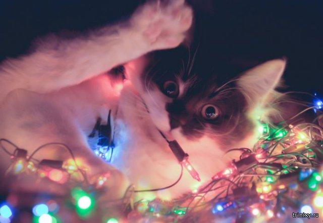Юрий Куклачёв просит не наряжать котов в электрические гирлянды для флешмоба