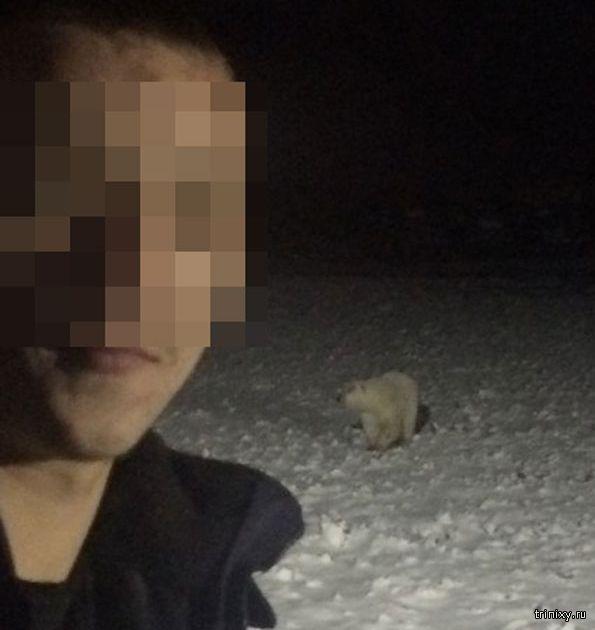Взорвавший белую медведицу мужчина отделался штрафом в 3000 рублей