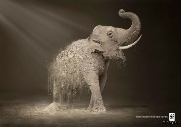 Креативные социальные принты WWF