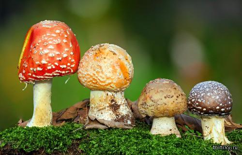 Тихая охота или интересные факты о грибах