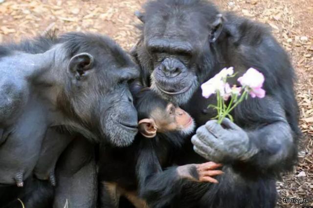 Немного нежности и семейного тепла из мира животных