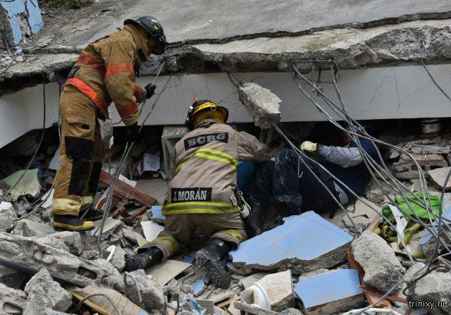 Пес в Эквадоре спас 7 человек из-под завалов