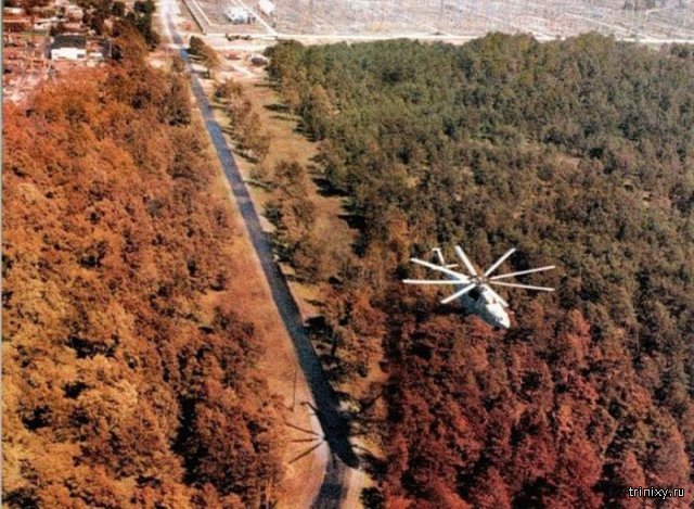 Рыжий лес зоны отчуждения Чернобыльской АЭС