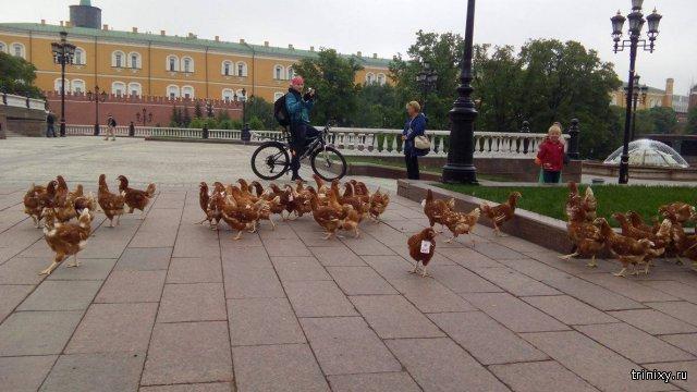 19 мая на манежной площади полиция ловила куриц