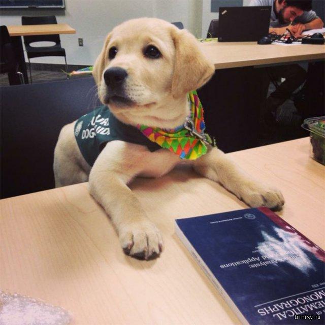 15 собак, которые уверены в том, что они люди