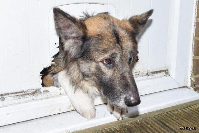 Собака прогрызла дверь