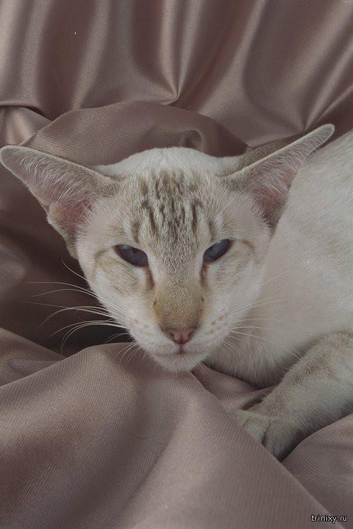 Кошки рио