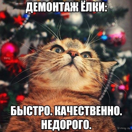 Реклама от котейки