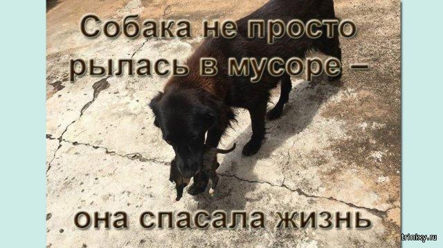 Собака не просто рылась в мусоре – она спасала жизнь