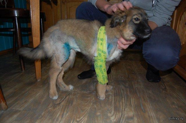 Спас и приютил сбитого щенка