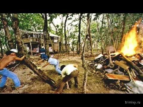 Как жила гавайская община: рай, уничтоженный правительством