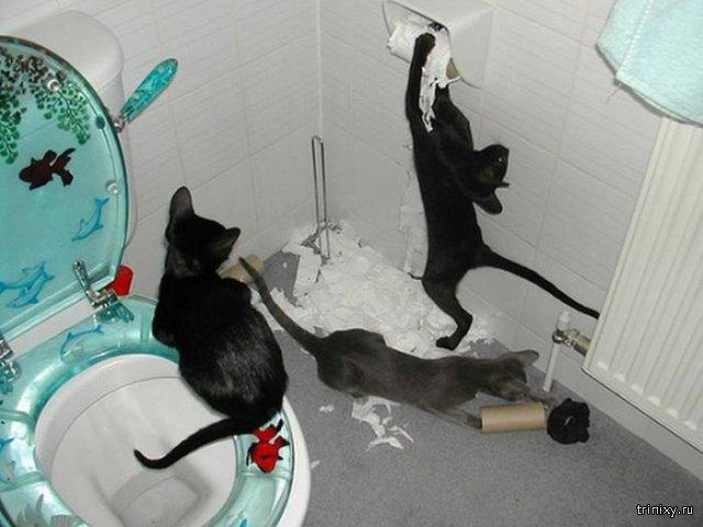 Коты проказники