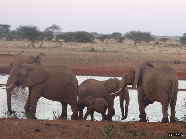Житель Кении спасает животных от сильной засухи