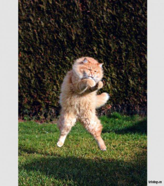 Приколы с котами!